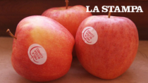 Un trattamento sbagliato: a rischio la produzione della Mela Rossa Cuneo IGP
