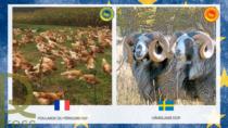 Salgono a 1.351 le IG Food EU: registrati due nuovi prodotti