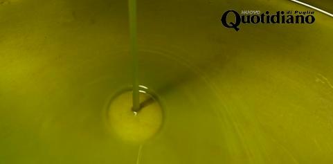 Olio, made in Puglia un terzo del prodotto
