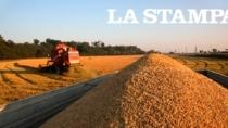 Nasce nel Vercellese la strada del riso con aziende, ristoranti e associazioni