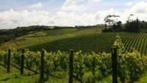 Il Consorzio di Tutela del vino dell