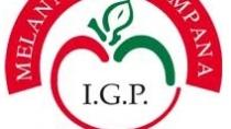 Filiera della Melannurca Campana IGP: esperti a confronto