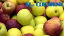 E le mele di Valle Igp si mangiano con gusto negli iper lombardi