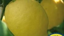 Limone di Siracusa IGP rimedio naturale contro i calcoli renali