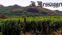 Frascati Docg meno vino più qualità