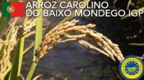 Arroz Carolino do Baixo Mondego IGP - Portogallo