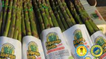 Asparago Verde di Altedo IGP: una risorsa del territorio