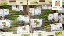 Asparago Verde di Altedo IGP: convegno sui trend di mercato