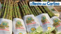 Asparago Verde di Altedo IGP, aumentano le superfici dedicate e la richiesta della Gdo