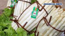 Asparago Bianco di Bassano DOP, l