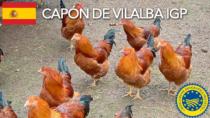 Capón de Vilalba IGP - Spagna