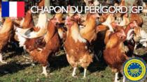 Chapon du Périgord IGP - Francia