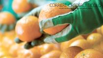 Il consorzio Clementine di Calabria IGP dice sì all'etichetta di origine per gli agrumi trasformati
