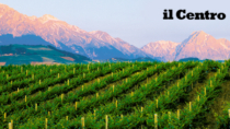 Il vino Colline Teramane DOP cresce sul mercato del +13%
