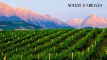 Nuova composizione per il Consorzio Colline Teramane Montepulciano d