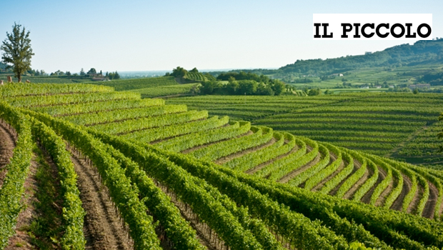 Collio DOP: 1500 occupati e crescita dell