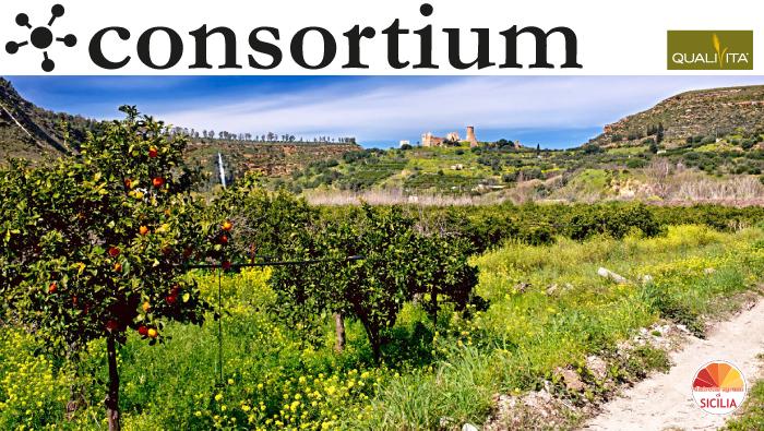 Le Vie della Zagara, gli agrumeti siciliani diventano itinerari turistici