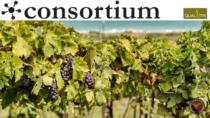 L'Abruzzo dei vini, una qualità che cresce