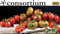 Pomodoro di Pachino IGP, cinque varietà per un territorio unico