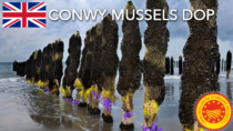 Conwy Mussels DOP - Regno Unito
