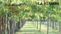 Coesione territoriale: in sinergia con i Consorzi nascono i comuni DOP per valorizzare i vini a denominazione