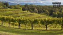 Friuli DOC: in dirittura d