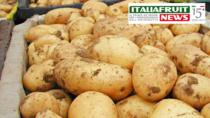 Patata del Fucino IGP, scatta la vendita del prodotto certificato