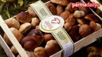 Il Fungo di Borgotaro IGP diventa l'unico certificato in Europa