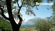 Olio Garda DOP, lo schiaffo della Regione Lombardia