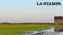 Baraggia e Vercellese: se continua così il riso è in pericolo