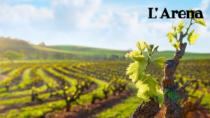 Vino, Lessini Durello DOP: tre giorni di promozione per i Trent'anni delle bollicine