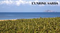 Sardegna, i Consorzi di tutela del vino chiedono lo stop al Fisco fino al 2021