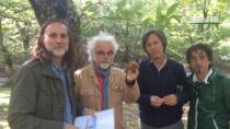 Linea verde Rai 1 – La castanicoltura irpina a marchio IGP