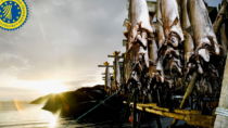 Esperti italiani vedono un grande futuro per lo Stoccafisso delle Lofoten
