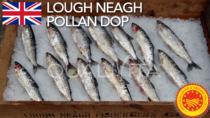 Lough Neagh Pollan DOP - Regno Unito