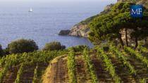 Consorzio Tutela Vini della Maremma, obiettivo 60 milioni