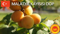 Malatya Kayısısı DOP - Turchia