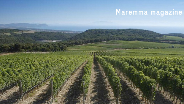 Maremma Toscana DOP, il Consorzio promuove vino e territorio
