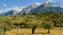 Olio Sardegna DOP, scadenza adesioni al sistema di certificazione 30 giugno 2017