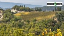 Orvieto DOP, il Consorzio del vino ora lancia la sfida ai mercati