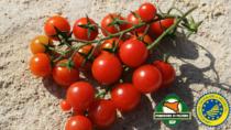 Le proprietà nutraceutiche della IGP Pomodoro di Pachino: se ne parla il 12 ottobre in un workshop a cura del Consorzio di tutela