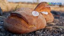 Puglia, il Pane di Altamura DOP nel 2016 a + 17,89%