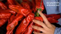Il Peperone di Senise IGP sbarca in Giappone e la produzione mira a nuovi terreni