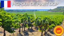 Picpoul de Pinet DOP - Francia
