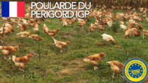 Poularde du Périgord IGP - Francia