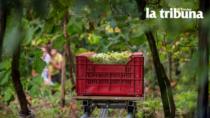 Viticoltura sostenibile: in Veneto l