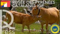 Nuova IGP Transfrontaliera Spagna-Francia, arrivano a 1.316 le IG Food in EU