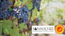 Nel 2018 cresce il vino da uve Falanghina a DOP e IGP venduto nei supermercati
