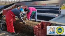 Sicurezza&Garanzia DOP – Asparago di Badoere IGP
