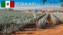 Tequila IG - Messico